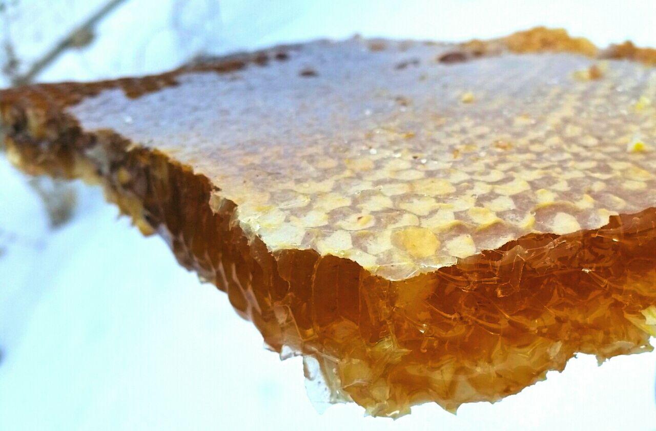 Колодный мёд